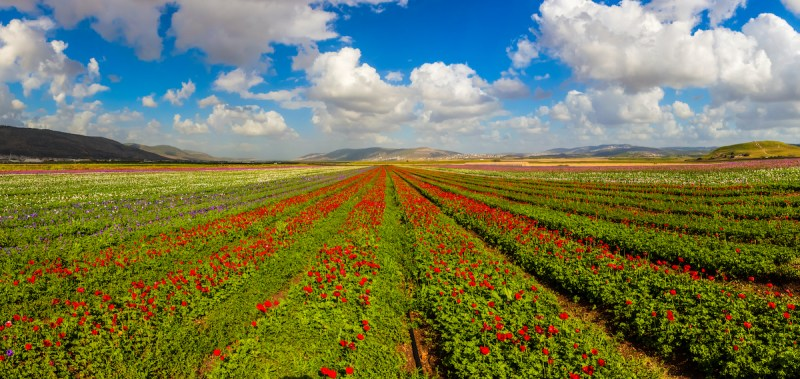 Golan Heights And Galilee Tour - 2 Days 9