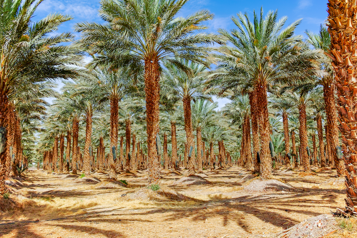 Timna Park And Desert Kibbutz Agriculture Tour From Eilat 6