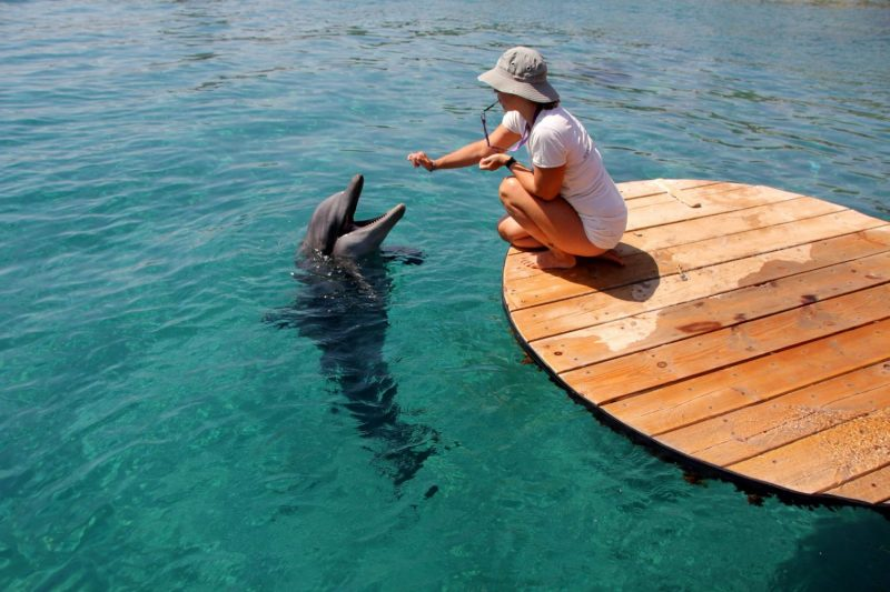 Swim With Dolphins Is A Great Activity To Do In Eilat