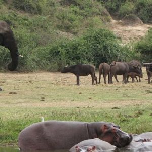 Queen Elizabeth National Park1