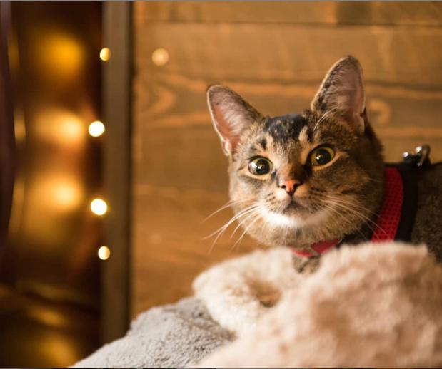 En Islande, Pal la chatte chasseuse de souris a trouvé un job - Crédit photo : FossHotel