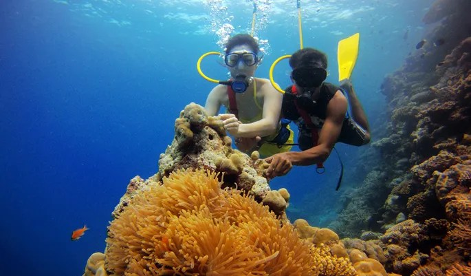 Image result for scuba diving lakshadweep islands