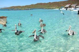 Isla Coronados tour, Loreto National Marine Park