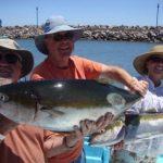 Sport Fishing Yellow Tail Loreto Baja California Sur