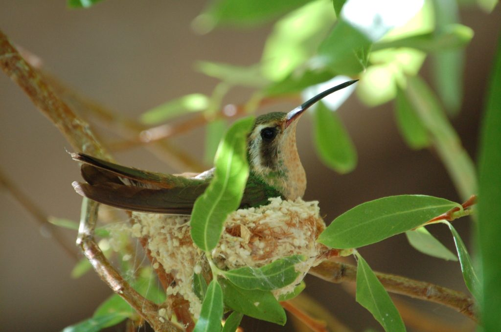 Spring is the time to see these Endemic bird nest