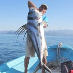 100 lbs rooster fish. Catch and release!!