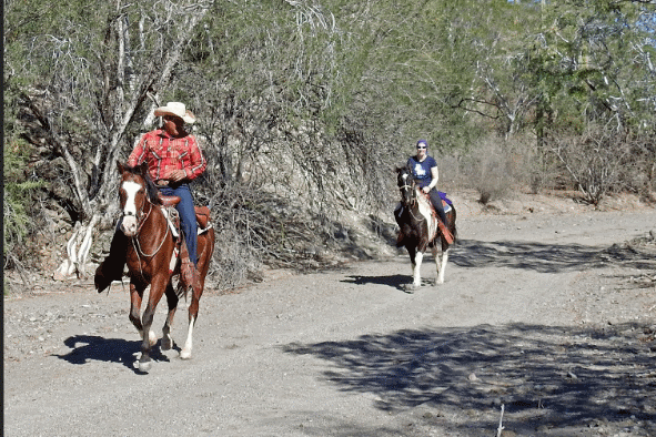 Horse back tours from Loreto BCS. All levels welcome