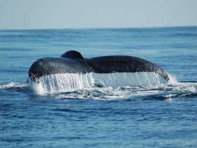 Blue-Whale-watching-Loreto-bcs.jpg