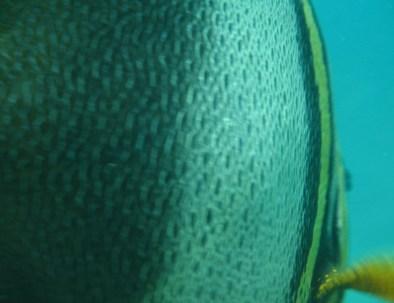 diving-loreto-063-1024x768-1.jpg