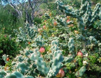 green-desert-1.jpg