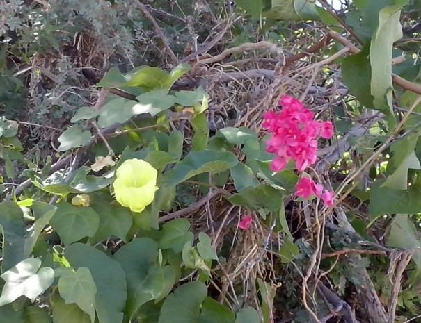 Flora and Fauna Sonoran Desert. Loreto Sea and Land Tours