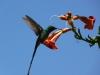 mendoza-1_parc-saint-martin_colibri