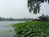 lac-qianhai-lotus