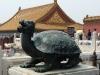 La tortue-dragon