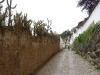 cactus-sur-les-murs-a-cusco_san-blas