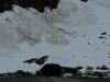 fiordland-17_tunnel-homer