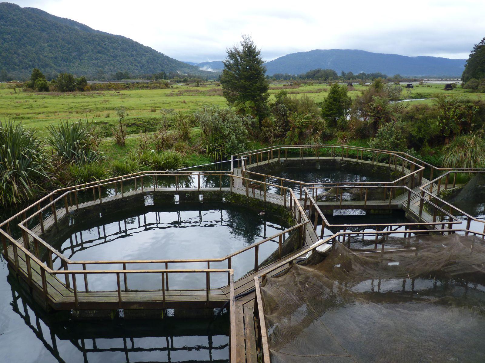 ferme-de-saumon-lac-paringa