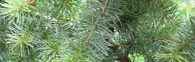 Votre abri de jardin en pin Douglas : robustesse et élégance