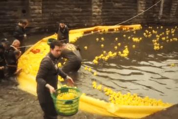 Duck Race 2015 : 14 000 canards en plastique dévalent les eaux de la Pétrusse