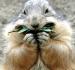 logo_marmotte