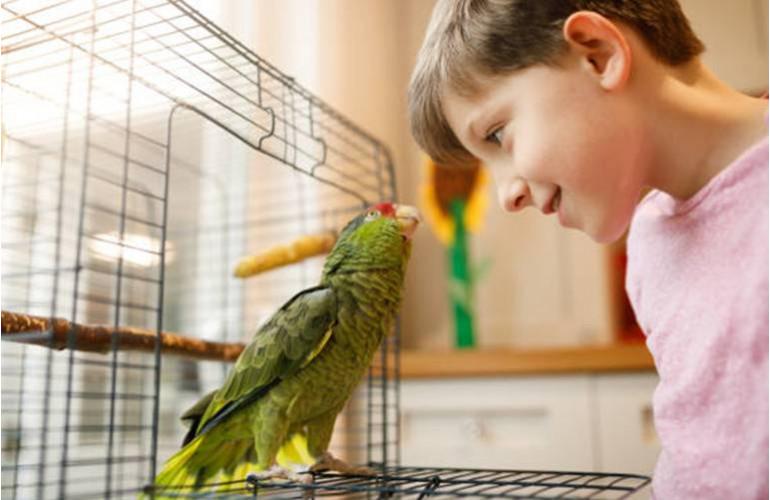 Oiseaux Prendre Soin Dun Oiseau Et De La Cage