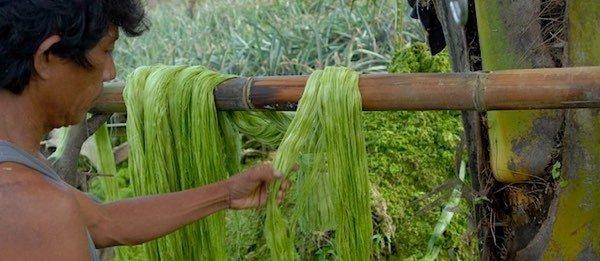 Le Piñatex, un textile d'origine végétale durable et biodégradable