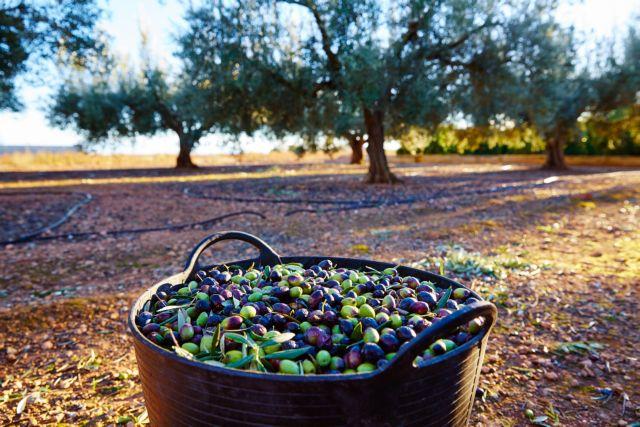 Ελληνικό ελαιόλαδο : Αλμα των εξαγωγών την τελευταία 20ετία | tovima.gr