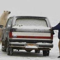 Polar Scare