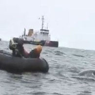 Rescuers Don't Fail Whale Near New York Harbor