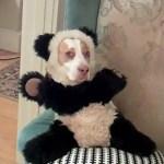 Ultimate Dog Shaming: VIDEO