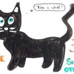 A Purrfect Science Lesson About Cats: VIDEO
