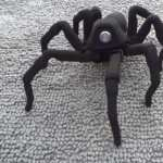 Lifelike, One-Eyed Robot Spider Might Creep You Out: VIDEO