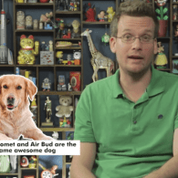 41 Fun and Furry Facts about Dogs: VIDEO