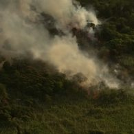 'Meat Rack' Between Gay Communities of Fire Island Pines and Cherry Grove Scorched by Brush Fire
