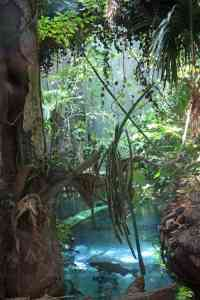 California_Academy_of_Sciences_rainforest_scene