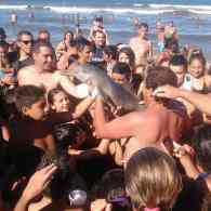 Sunbathers Kill Rare Baby Dolphin in Crush to Pet It and Take Selfies