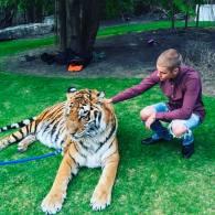 tiger Justin Bieber