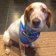 A Dog Named Mack Was Attacked in Australia for Wearing an Equality Bandana