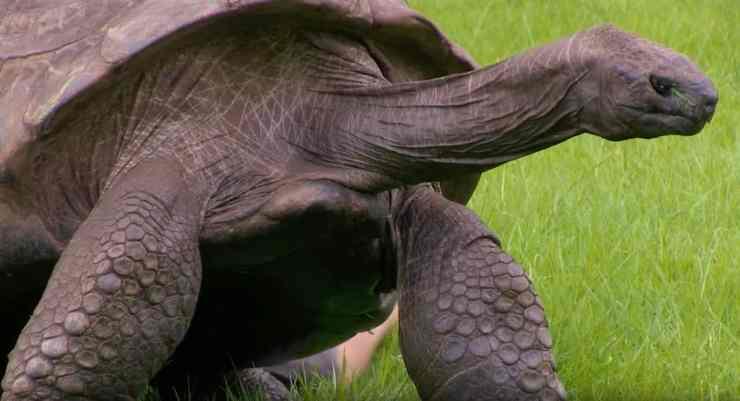 jonathan tortoise gay