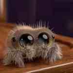 spider animation