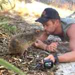 Chris Hemworth quokka