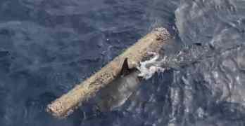 shark scratching