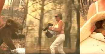 woman koala