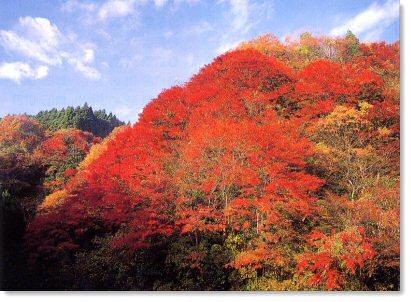 「養老渓谷 もみじの谷 紅葉」の画像検索結果