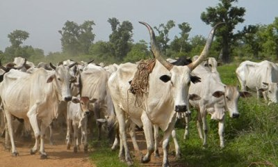Fulani Herdsmen Invaded Uwheru In Delta State