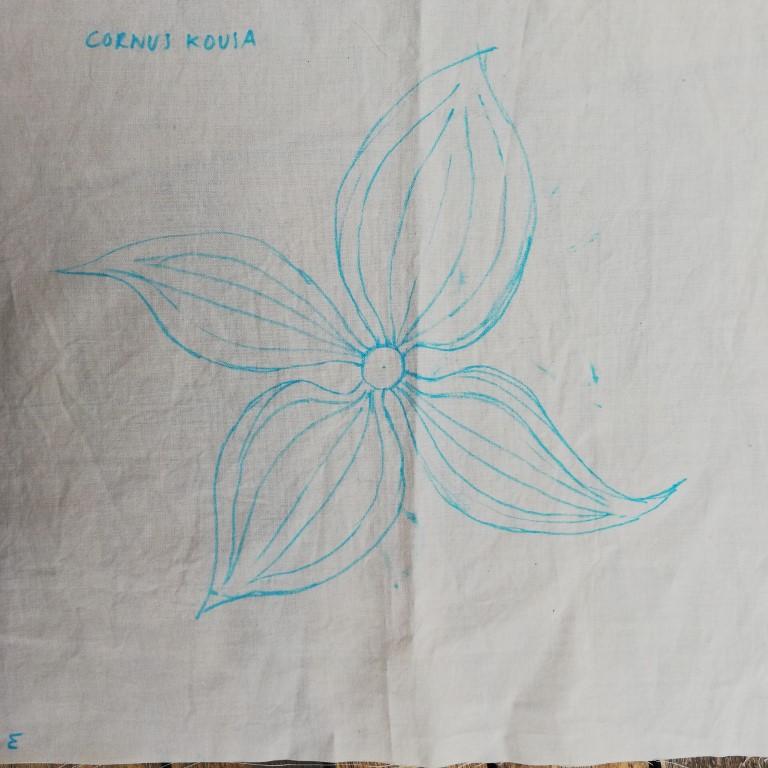 1.-drawing-outline-for-Cornus-Kousa