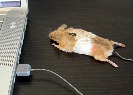 Real Mouse Computer Mouse