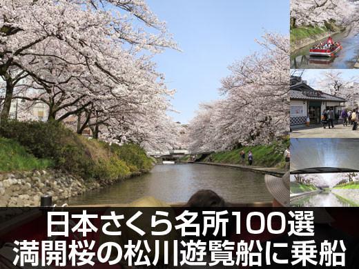 動画有 日本さくら名所100選 満開桜咲く松川遊覧船に乗船