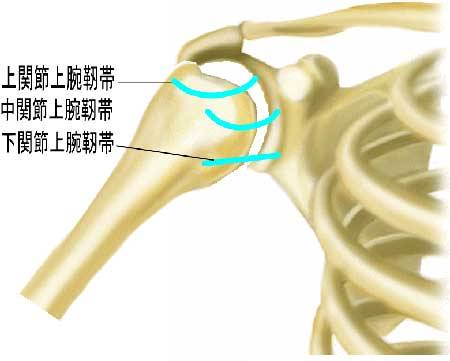 関節上腕靭帯
