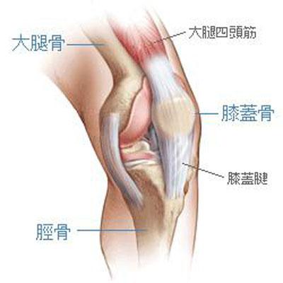 膝の周りの骨